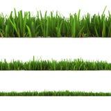 Gras dat op het wit wordt geïsoleerde Stock Afbeeldingen