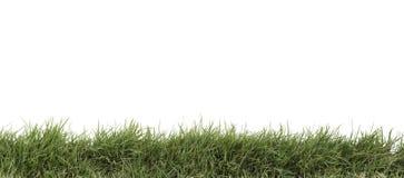 Gras dat op wit wordt geïsoleerda Stock Afbeeldingen