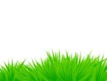 Gras dat op wit wordt geïsoleerdm Stock Foto's