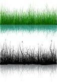 Gras - dat op wit wordt geïsoleerds Royalty-vrije Stock Afbeelding