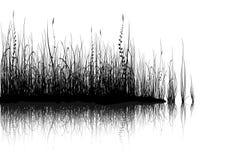 Gras - dat op wit wordt geïsoleerds vector illustratie