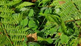 Gras in dauw, bosvaren stock fotografie