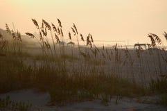 Gras in de duinen   royalty-vrije stock afbeelding