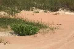 Gras in de Duinen Stock Foto's