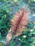 Gras in de Herfst stock afbeelding