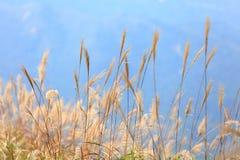 Gras in de herfst royalty-vrije stock foto