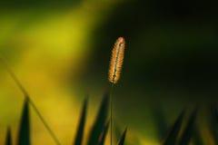 Gras in de herfst stock foto