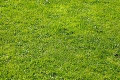 Gras - de natuurlijke blik Stock Afbeeldingen