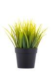 Gras in de Pot van de Bloem Stock Foto