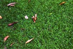 Gras in de tuin Royalty-vrije Stock Fotografie