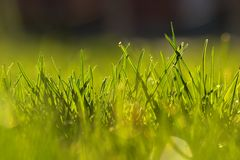 Gras in de vroege lente Stock Foto's