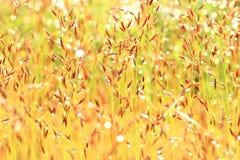 Gras in de wind Royalty-vrije Stock Afbeelding
