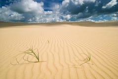 Gras in de Woestijn Stock Afbeelding
