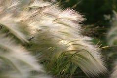 Gras in de zomer. Royalty-vrije Stock Foto's