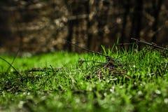 Gras in de zon Royalty-vrije Stock Afbeelding