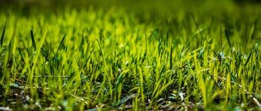 Gras in de zon Stock Foto's