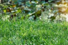 Gras in dem Lotosteich Lizenzfreie Stockfotografie