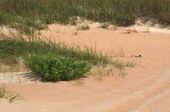 Gras in den Dünen Stockfotos