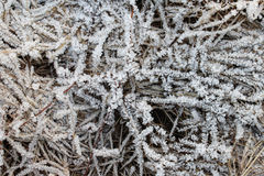 Gras in den Eiskristallen Stockfotografie