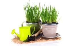 Gras in den Töpfen und in den Gartenwerkzeugen Stockbilder
