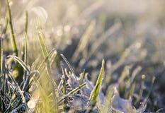 Gras in den Tröpfchen und im Frost in der Sonne und im grellen Glanz Stockbild