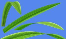 Gras in den Tropfen des Taus lokalisiert Vektor Abbildung