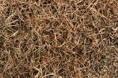 Gras in der Dürre Stockfotografie