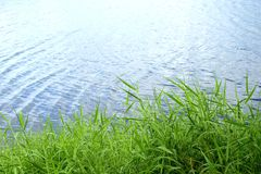 Gras an der Flussseite Stockfotos