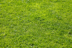 Gras - der natürliche Blick Stockbilder