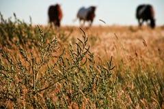 Gras in der Pferden-Weide Stockbild