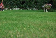 Gras des üppigen Gartens mit Blumen im Abstand Stockfotografie