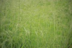Gras des vollen Hintergrundes der Unkräuter stockfoto