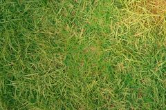 Gras des Yard oder des Feldes für Hintergrund mit Sonne flarre lizenzfreie stockfotografie