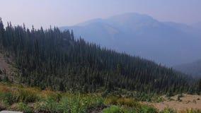 Gras die langs de rand van olympische bergketen in Washington blazen stock footage