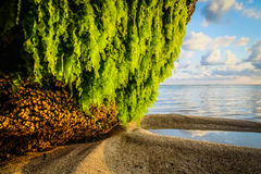 Gras do mar Imagens de Stock
