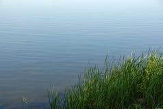 Gras door de rivier Royalty-vrije Stock Fotografie