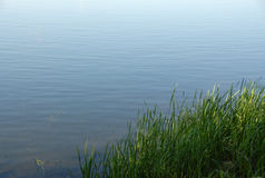 Gras durch den Fluss Lizenzfreie Stockfotografie