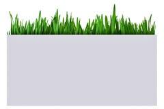 Gras in een document vakje royalty-vrije stock afbeeldingen