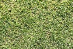 Gras in een park Royalty-vrije Stock Afbeelding