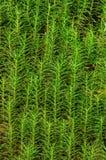 Gras een patroon Stock Foto's