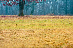 Gras in einem Herbst-Wald lizenzfreie stockfotos