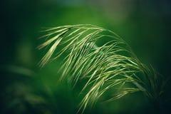 Gras eins Stockbild