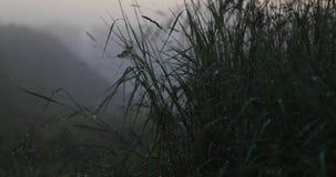 Gras en andere vegetatie na regen video4k stock footage