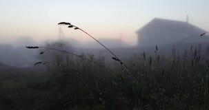 Gras en andere vegetatie na regen video4k stock videobeelden