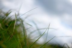 Gras en bewolkte hemel Stock Afbeelding