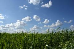 Gras en bewolkte hemel Royalty-vrije Stock Foto's