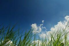 Gras en blauwe hemel stock foto's