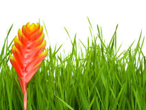 Gras en bloem Stock Fotografie