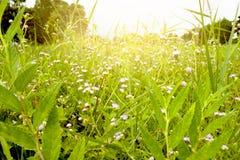 Gras en bloem Royalty-vrije Stock Afbeeldingen