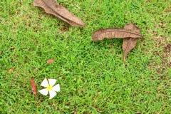 Gras en bloem Stock Foto's